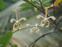 Orkidéblomma med söt bokeh Arkivfoton