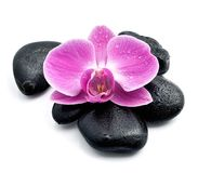 Orkidéblomma på svarta stenar Royaltyfria Foton