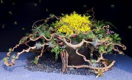 Orkidéblommabakgrund Arkivfoton