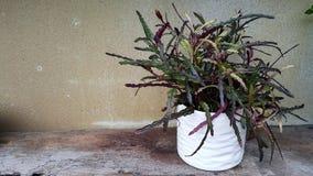 Orkidéblommadekor i trädgård Royaltyfri Foto