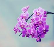 Orkidéblommafilial och tappningljus Royaltyfria Bilder
