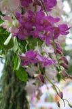 Orkidéblommagarnering Arkivbild