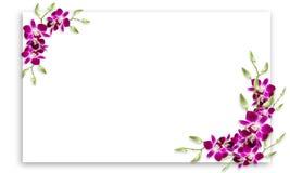 Orkidéblommaram med vitt kopieringsutrymme royaltyfria bilder