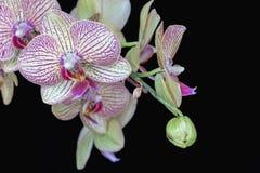 Orkidéblommastam och ormbunksblad Royaltyfri Foto