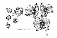 Orkidéblommateckningen och skissar Royaltyfri Foto