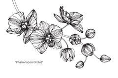 Orkidéblommateckningen och skissar Fotografering för Bildbyråer