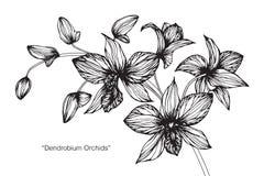 Orkidéblommateckningen och skissar Royaltyfria Foton