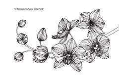 Orkidéblommateckningen och skissar Arkivbild