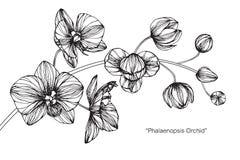 Orkidéblommateckningen och skissar Royaltyfria Bilder