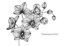 Orkidéblommateckningen och skissar Royaltyfri Fotografi