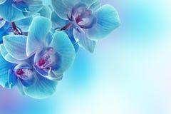 Orkidéblommor Arkivbild