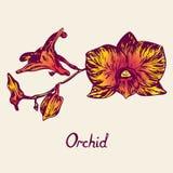 Orkidéblommor fattar, med inskriften Arkivbild