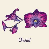 Orkidéblommor fattar, med inskriften, lilor, rosa färger, blått Royaltyfria Foton