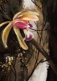 Orkidéblommor - materielbild Arkivfoton