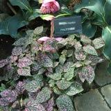 Orkidéblommor och dekorativt Fotografering för Bildbyråer
