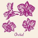 Orkidéblommor ställde in, med inskriften, översikten Royaltyfria Bilder