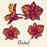 Orkidéblommor ställde in, med inskriften, lilor, guling, apelsin Arkivbild
