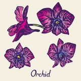 Orkidéblommor ställde in, med inskriften, lilor, rosa färger, blått Arkivfoto