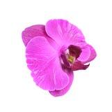 Orkidéblomning Arkivfoto