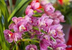 Orkidéblomning Royaltyfri Bild