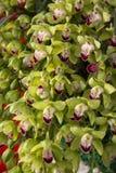 Orkidéblomning Royaltyfria Bilder