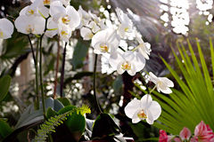 Orkidéfilial Royaltyfri Fotografi