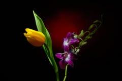 Orkidéfilial och tulpan med vattendroppar på dem Royaltyfri Foto