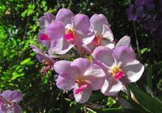 Orkidégrupp Royaltyfri Fotografi