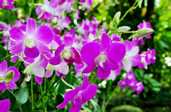 Orkidégrupp Arkivbilder
