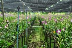 Orkidélantgård Arkivbilder