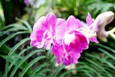 Orkidélantgård fotografering för bildbyråer