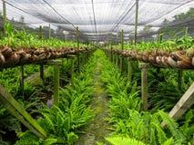 Orkidélantgårdrad med den gröna ormbunken på fuktig jordning arkivfoto