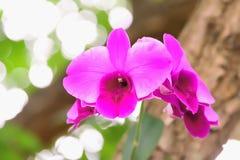 Orkidén är en populär dekorativ växt Royaltyfria Bilder