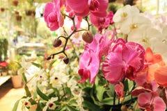 Orkidén blommar i växthuset Arkivbilder