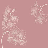 Orkidén blommar illustrationen som rambakgrund Fotografering för Bildbyråer