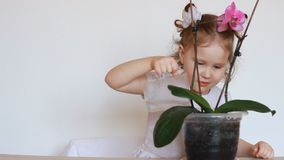 Orkidén för behandla som ett barnflicka och för grön växt Ett barn som bevattnar en blomma arkivfilmer