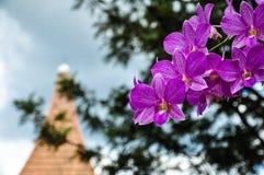 Orkidér Royaltyfria Bilder