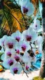 orkidér blommar i trädgården royaltyfri foto