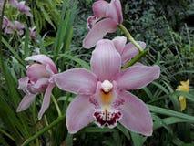 Orkidér blommor, tropiska blommor Arkivbilder