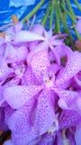 Orkidér för dig Arkivfoton