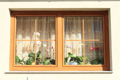 Orkidér i fönster Fotografering för Bildbyråer
