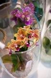 Orkidér i glass sammansättning Arkivbild