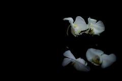 Orkidér i mörker Arkivfoton