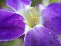 Orkidér i trädgård Fotografering för Bildbyråer