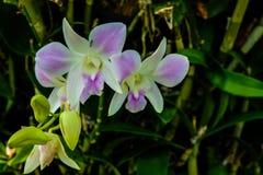Orkidér i trädgården i våren för orkidér royaltyfri fotografi