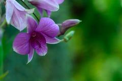 Orkidér lilor och gräsplannaturbakgrund fotografering för bildbyråer