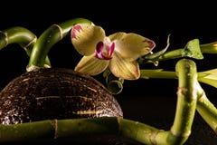 Orkidér med coccnut Royaltyfria Bilder