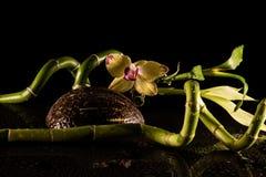 Orkidér med coccnut Fotografering för Bildbyråer