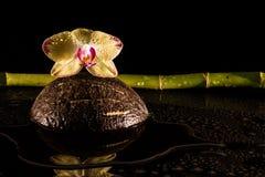 Orkidér med coccnut Arkivfoto