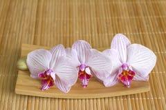 Orkidér på begrepp för matt abstrakt asiatisk mat för bambu unikt Arkivbild